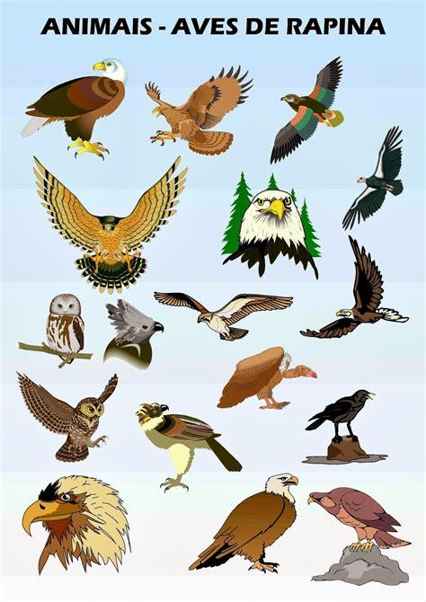 Aves de Rapina   Enciclopédia Global™