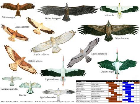 Aves del NOA y algo mas..: CÓMO SON LAS AVES