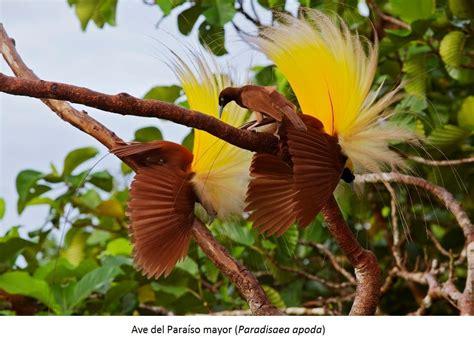 Aves Del Paraiso | www.pixshark.com   Images Galleries ...