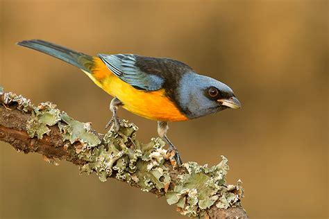 Aves   depuebloaciudad