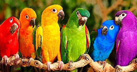 Aves exóticas del Mundo.   Imágenes   Taringa!