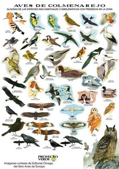 Aves - Google Search | Aves | Pinterest | Google