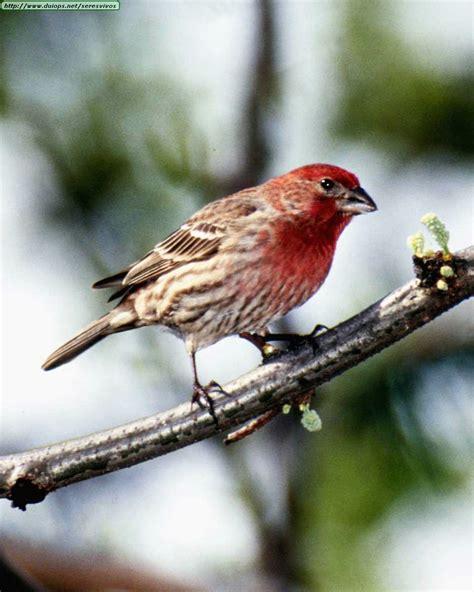 aves hermosas   Taringa!