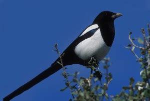 Aves más comunes en las ciudades | SEO/BirdLife