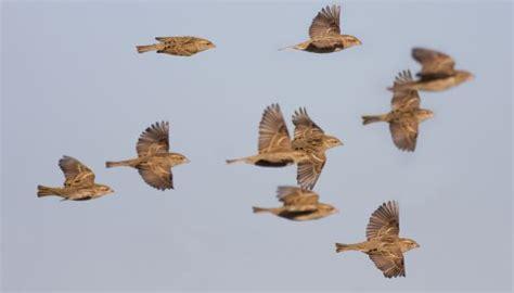 Aves migratorias a la baja   Sociedad   EL PAÍS