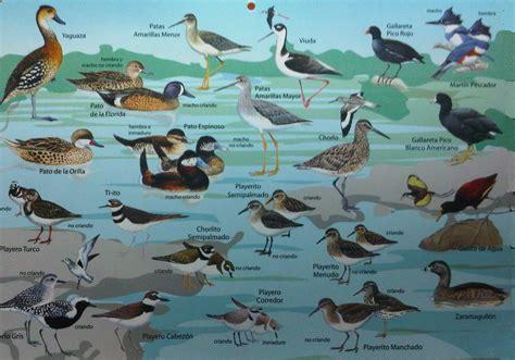 Aves Migratorias   ellinceiberico.com