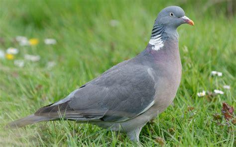 Aves migratórias ou parcialmente migratórias