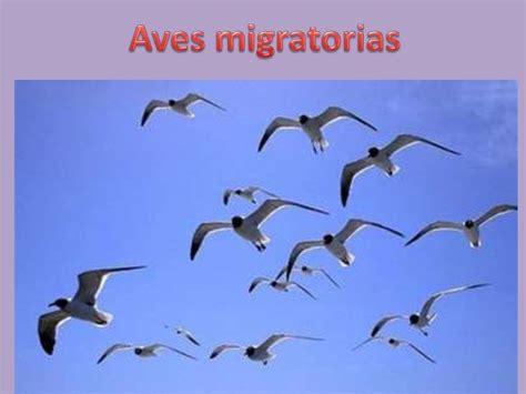 Aves migratorias v padín
