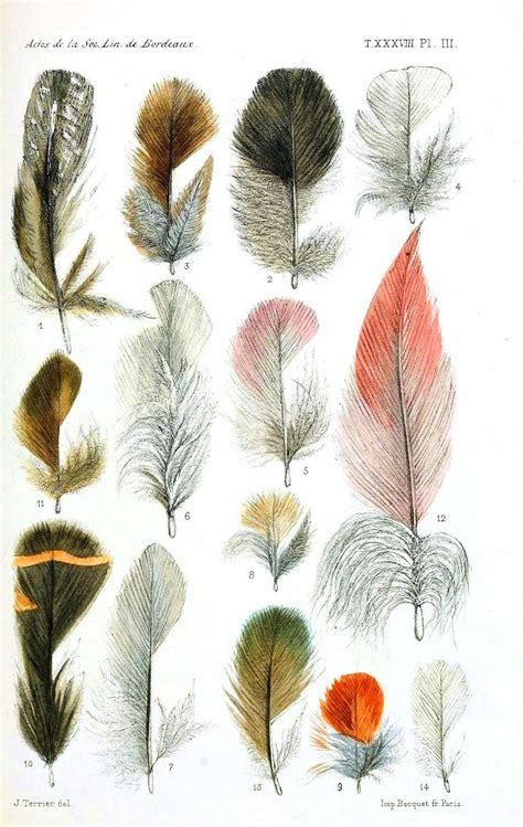 Aves. Pássaros. Tipos de penas. Desenho. Arte. | » Arte ...