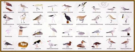 aves salvajes con sus nombres Archivos   Imagenes de Pajaros