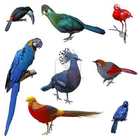 Aves   Tienda de mascotas pethome
