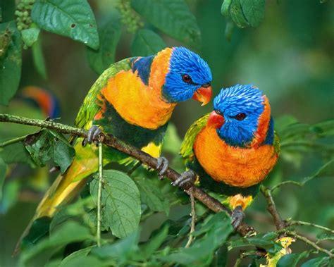 Aves tropicales   1280x1024 :: Fondos de pantalla y wallpapers