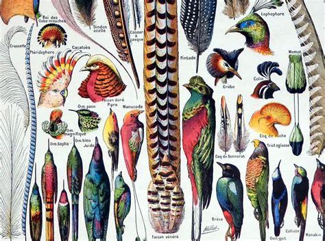 Aves tropicales: ilustración científica. Lámina Vintage ...