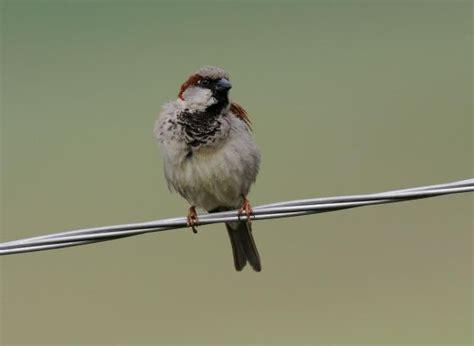 Aves: Y no volverán las oscuras golondrinas | Ciencia | EL ...