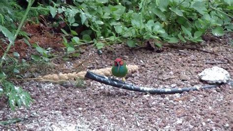 aviario pajaros exoticos en canarias 4 - YouTube