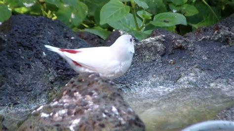 Aviario pajaros exoticos en tenerife - YouTube