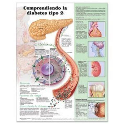 Awardpedia   The Digestive System Anatomical Laminated ...