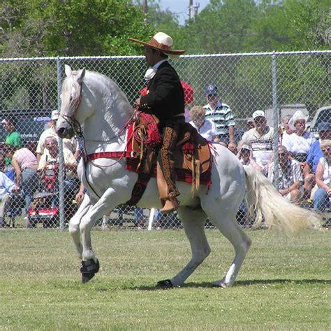 Azteca horse - Wikipedia