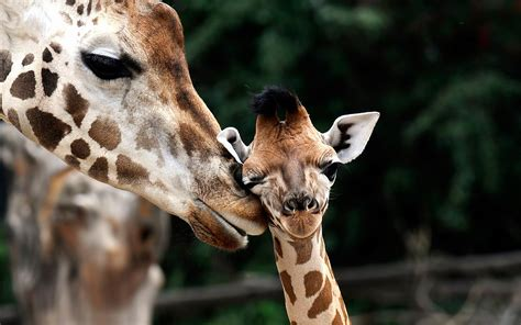 Baby Animal Wallpaper HD Images   One HD Wallpaper ...