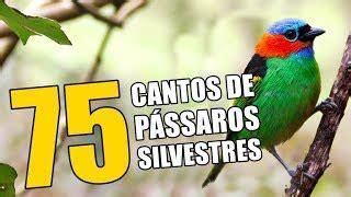 Baixar CANTO DE PASSAROS musicas gratis   Baixar mp3 ...