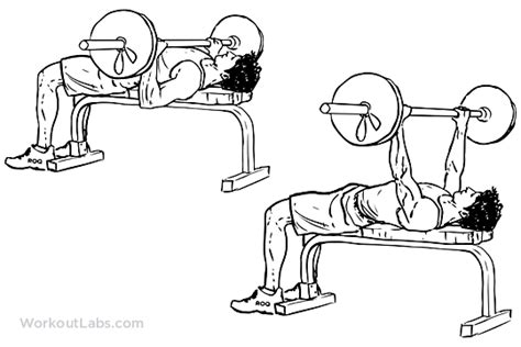 Barbell Bench Press / Chest Press   WorkoutLabs
