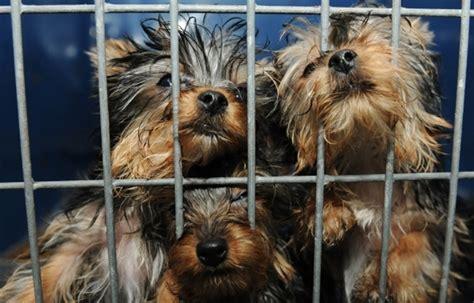 Barcelona cierra dos tiendas de animales por maltrato