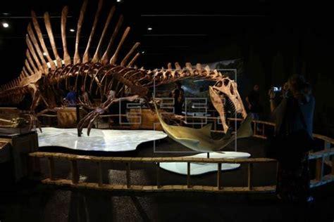 Barcelona exhibe reproducción del dinosaurio carnívoro más ...