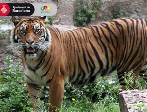 Barcelona Zoo - AttractionTix