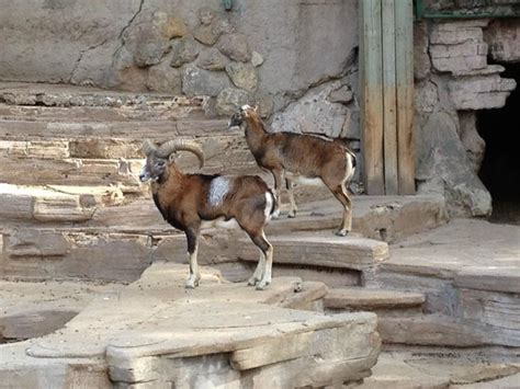 Barcelona Zoo: fotografía de Zoo de Barcelona, Barcelona ...