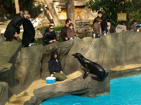Barcelona Zoo   photos, price, hours of work. How to get ...