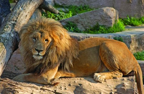 Barcelona Zoo – The Ultimate Family Day Out