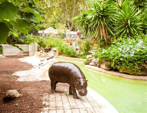 Barcelona Zoo tickets - Events and guide Barcelona