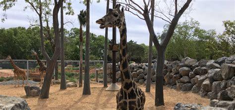 Barcelona Zoo - Tickets Online   Experience Catalunya