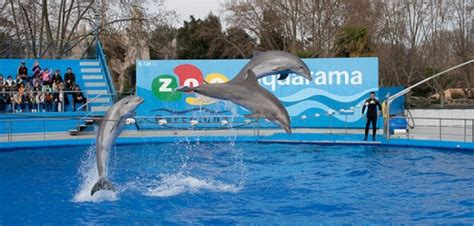 Barcelona Zoo | www.pixshark.com   Images Galleries With A ...