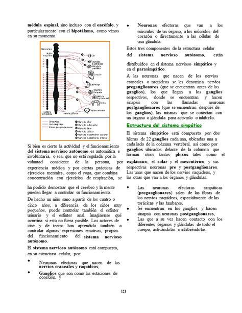 Bases biológicas de la psicología (página 6) - Monografias.com