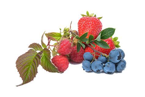 Batidos de frutas para perder peso   ¡Siéntete Guapa!
