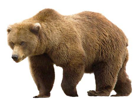 Bear PNG Transparent Image   PngPix