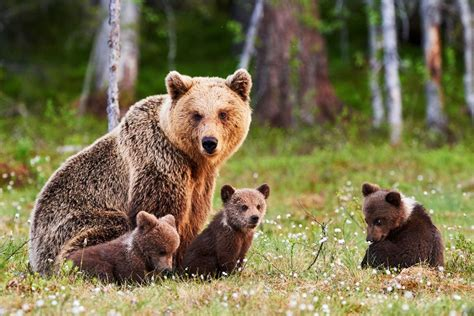 Bears | 15 cute animals that could kill you | MNN   Mother ...