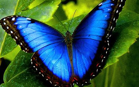 Beautiful Blue Butterfly picture - ID: 4560