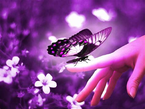 Beautiful Butterflies - Butterflies Wallpaper (9481170 ...