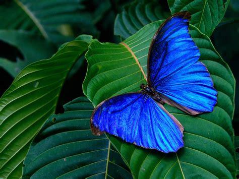 Beautiful Butterflies - Butterflies Wallpaper (9481176 ...