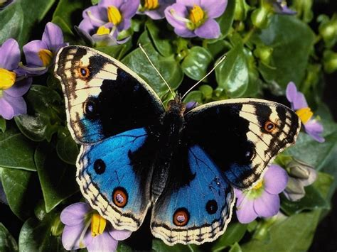 Beautiful Butterflies - Butterflies Wallpaper (9481194 ...
