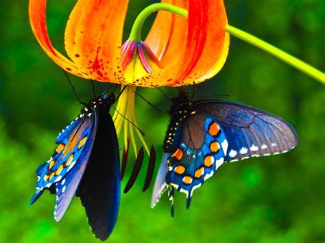 Beautiful Butterflies - Butterflies Wallpaper (9481730 ...