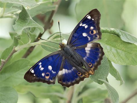 Beautiful Butterflies - Butterflies Wallpaper (9481941 ...
