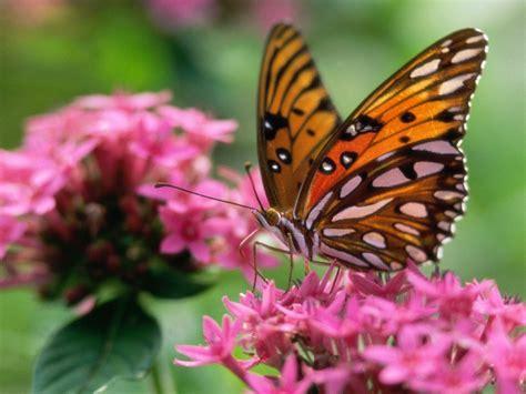 Beautiful Butterflies - Butterflies Wallpaper (9481970 ...