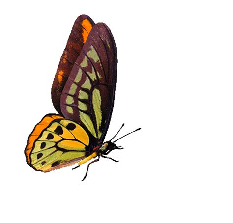 Beautiful Butterfly Animated Gif Images at Best Animations