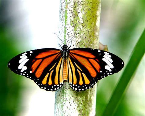 Beautiful butterfly - Butterflies Photo (16959436 ...