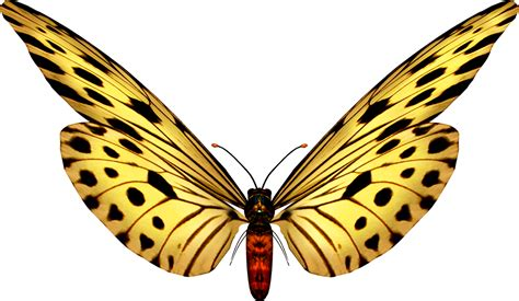 Beautiful Butterfly Images.   Oh My Fiesta! in english