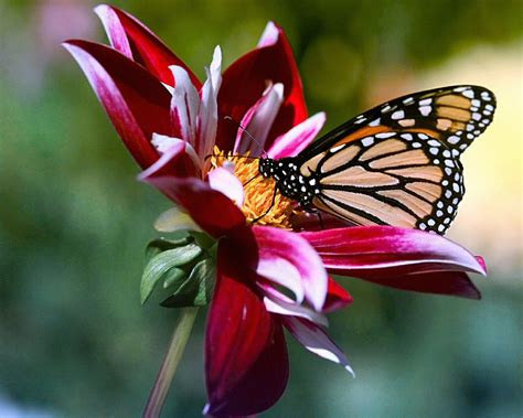 Beautiful Butterfly Photos ~ 521 Entertainment World