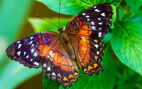 Beautiful Butterfly Wallpaper 445 | Wide Screen Wallpaper ...